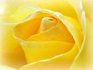 Lemon Petals by naturelover