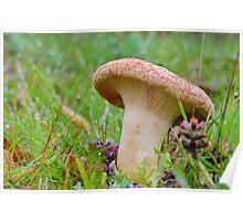 Lactarius Quietus   [ Oak milk cap ] Poster