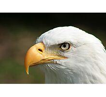 Bald Eagle Watching Photographic Print