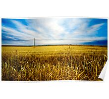Wheat fields Poster