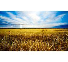 Wheat fields Photographic Print