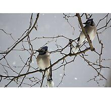 Mystical Birds Photographic Print