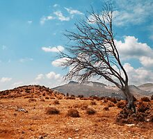 Tree landscape by carloscastilla
