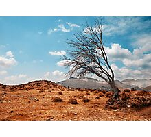 Tree landscape Photographic Print