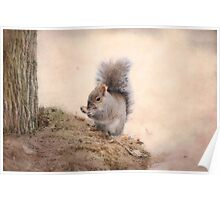 Squirrel-cuteness overload Poster