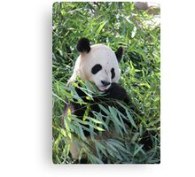 panda panda Canvas Print