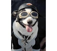 Biker Dog Photographic Print