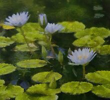 Water Lillies by mkurec