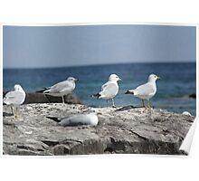 Seagulls Awaiting Poster
