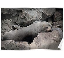 Rocks have Whiskers and Eyes Poster