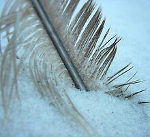 Abstract Seagull Feather on Beach by fandoms-fineart