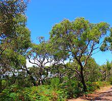 Blind Blight Australia by dundeethecroc