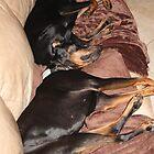 Sleeping Beauties !! by jozi1