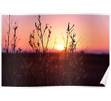 Grass Silhouette with a beautiful sunset Poster