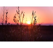 Grass Silhouette with a beautiful sunset Photographic Print