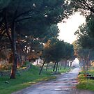 Last sunbeams on the Via Appia Antica by Arie Koene