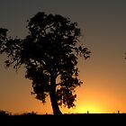 oxley sunrise by fazza