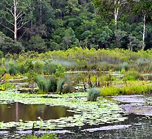 Lagoon Reflections  by Sally Murray