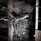Cob Webs and Birds Nests.. by trueblvr