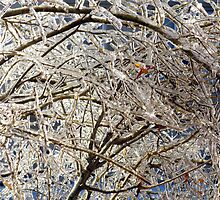 After the Ice Storm by Valentino Visentini