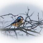 Black-capped Chickadee by PhotosByHealy