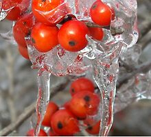 Cluster of Red by Rebecca Bryson