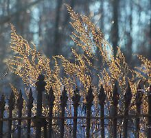 Golden Remnants of Summer in a Wrought Iron Fence by Gilda Axelrod