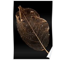 Leaf Lace Poster