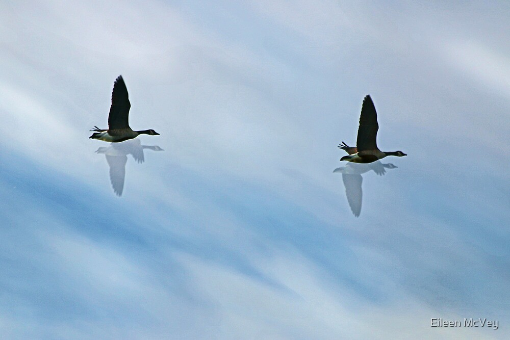 Flying Home by Eileen McVey