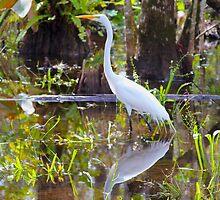 Everglades by Carey Chen