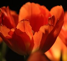 Simply Red by karina5