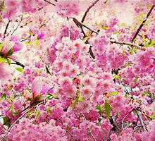 blossoms by denisemarley