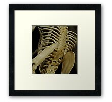 Hip Bone Is Connected Framed Print