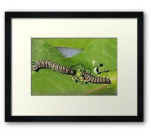 Caterpillar Love Framed Print