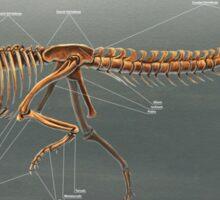 Carnotaurus Skeleton Study Sticker