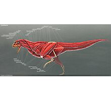 Carnotaurus Muscle Study Photographic Print