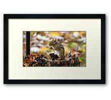 Chipmunk in Autumn Framed Print