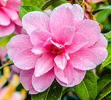After The Rain - Pink Flower by Mary Carol Story