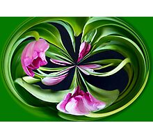 Tulip Abstract Photographic Print