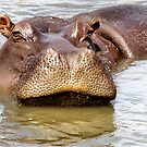 THAT'S ME ! HIPPOPOTAMUS AMPHIBIOUS - DIE SEEKOEI by Magaret Meintjes