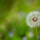 Make a Wish by Dana Horne