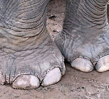 Elephant Toes © by Ethna Gillespie