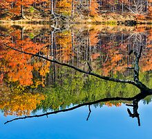 Branch Protrudes from Autumn Lake by Kenneth Keifer