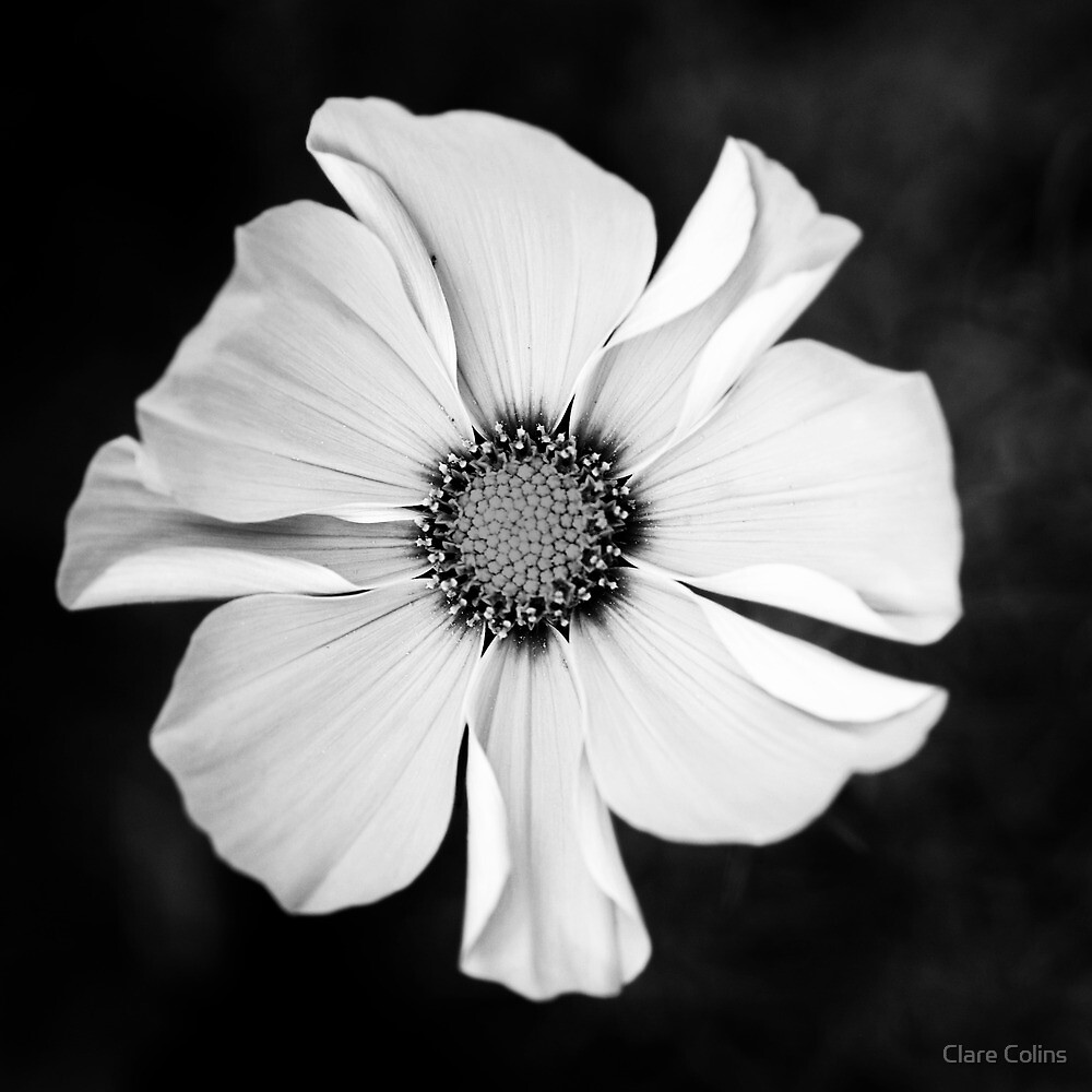 Stunning in Black & White by Clare Colins