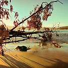 Fallen Beach Tree - Adventure Bay, Bruny Island, Tasmania, Australia by PC1134
