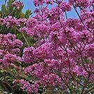 Pink Tree in My Area by Nira Dabush