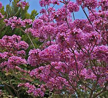 Pink Tree in My Area by Nira Dabush