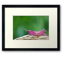 Pink Grasshopper Framed Print