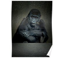 Baby gorilla Poster