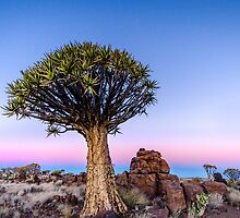 Dusk in the Desert - Namibia Africa by Beth  Wode